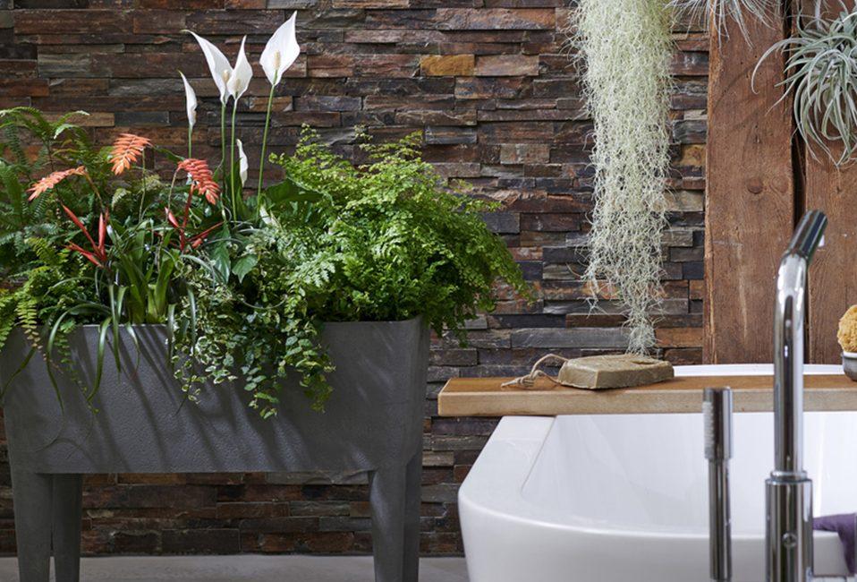 Spathiphyllum plante salle de bain tendance Blog Delbard mai entretien conseils