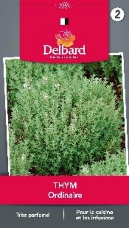 Graines Thym Blog Delbard plantation jardin