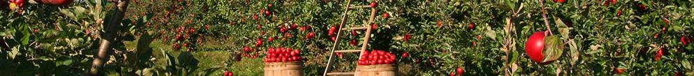 Verger Blog Delbard travaux mois Juin plantation jardin pommier