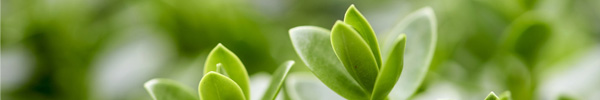 plante blog delbard jardin verte plantation