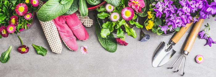 delbard blog vivaces jardin plantation fleurs