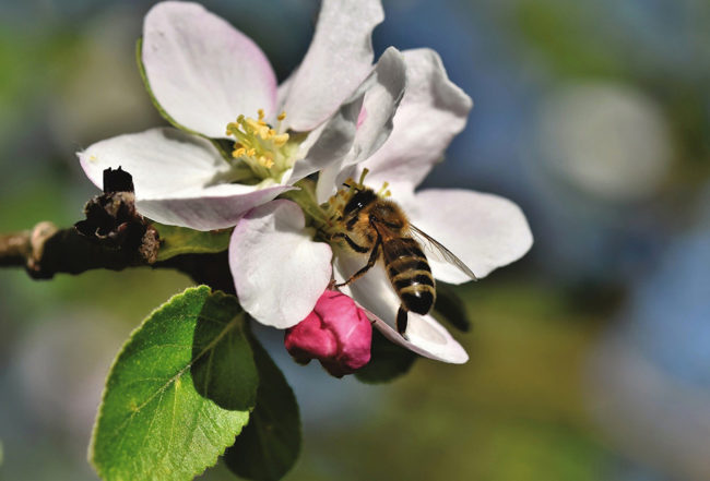 abeilles protection jardin blog delbard