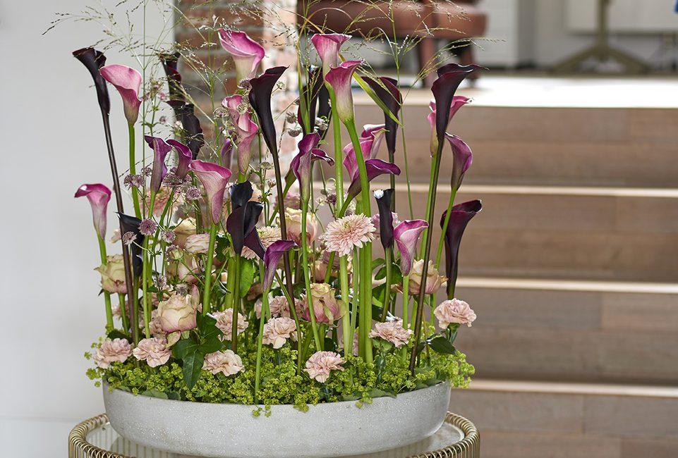 Calla Arum Blog Delbard jardin plante