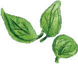 basilic-delbard-jardin-blog-recette