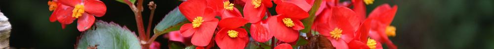 jardin fleurs blog delbard