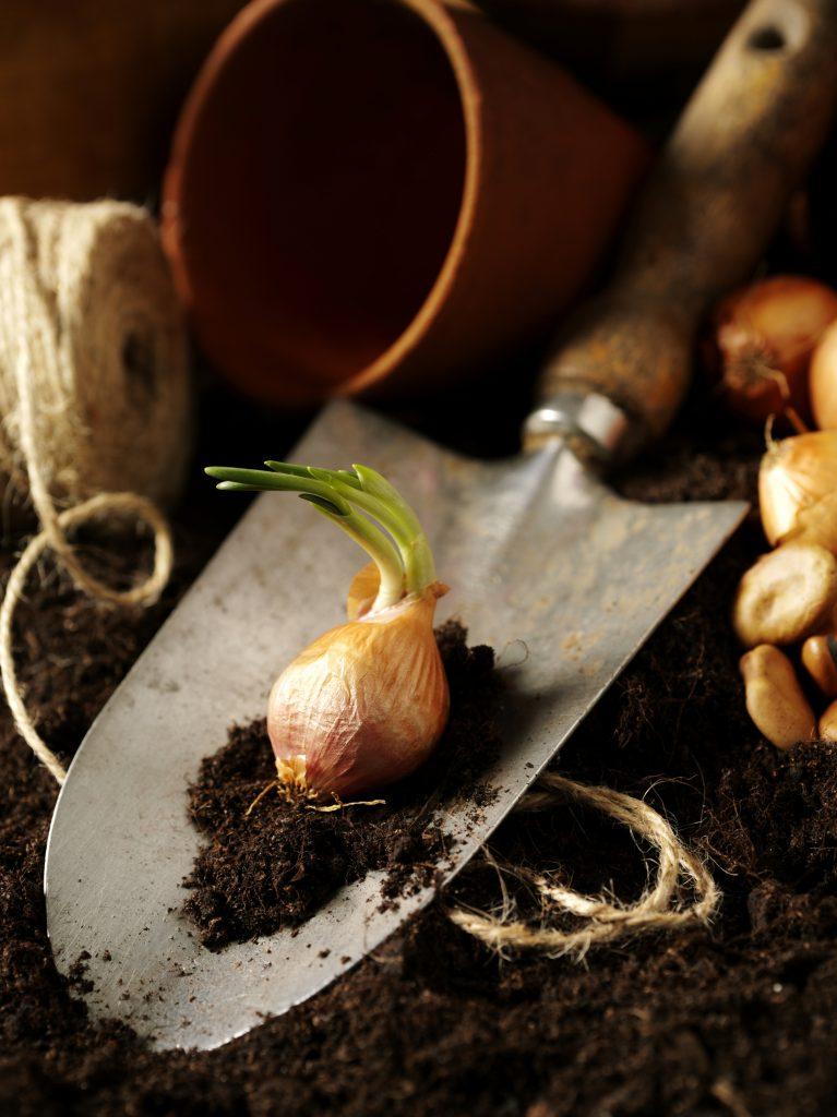Planter des bulbes - Mon chez moi