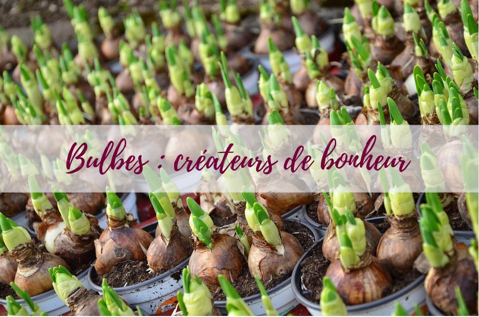 blog-jardin-bulbes-conseils-astuces-delbard