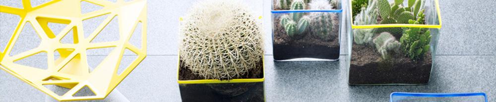 cactus plantes intérieur entretien arrosage feuillage terreau Blog Delbard