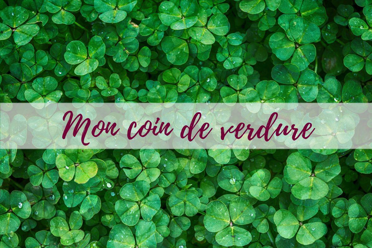 Gazon-blog-delbard-jardin-conseils-astuces