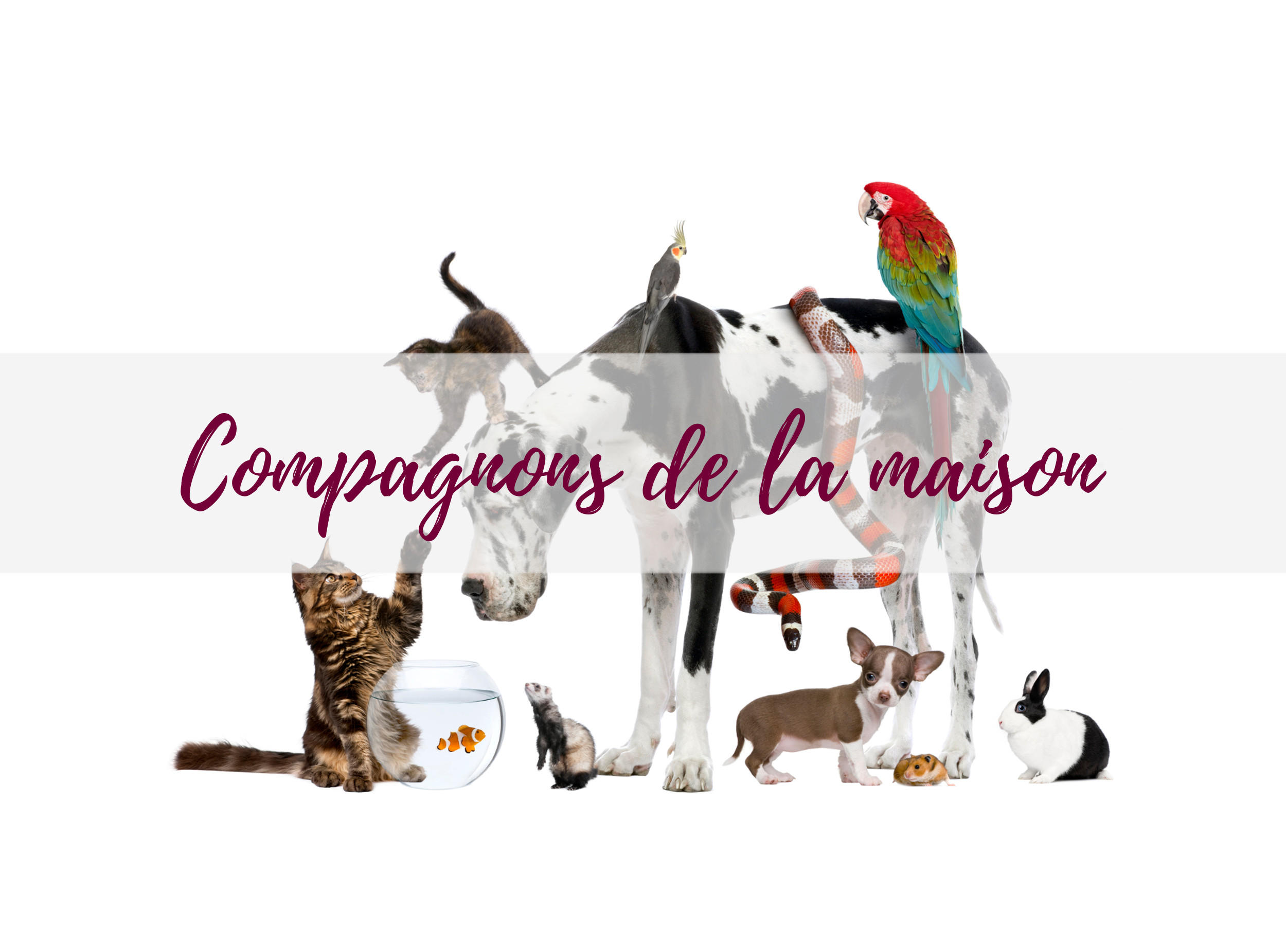 blog-jardin-animalerie-compagnons-animaux-delbard-conseils