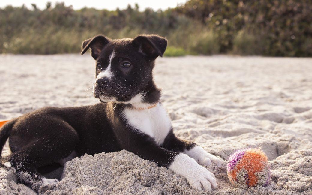 chien-vacances-plage-retour-balle-jeu