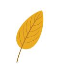 automne-blog-delbard-jardin