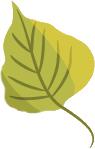 feuille-verte-blog-delbard-jardin-conseils