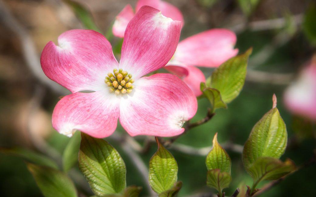 blog-delbard-jardin-cornouiller-hiver-plante