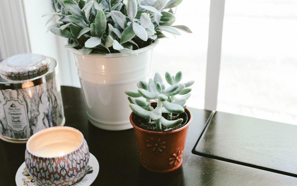 plantes-intérieur-hiver-soin-entretien-janvier
