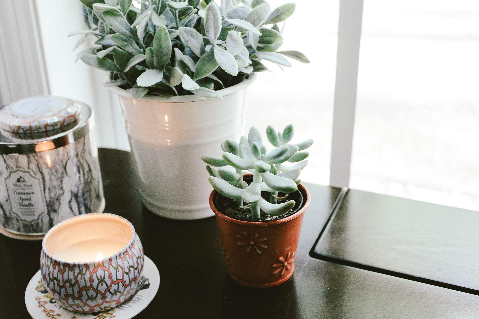 plantes d 39 int rieur j 39 en prends soin m me l 39 hiver le blog delbard. Black Bedroom Furniture Sets. Home Design Ideas