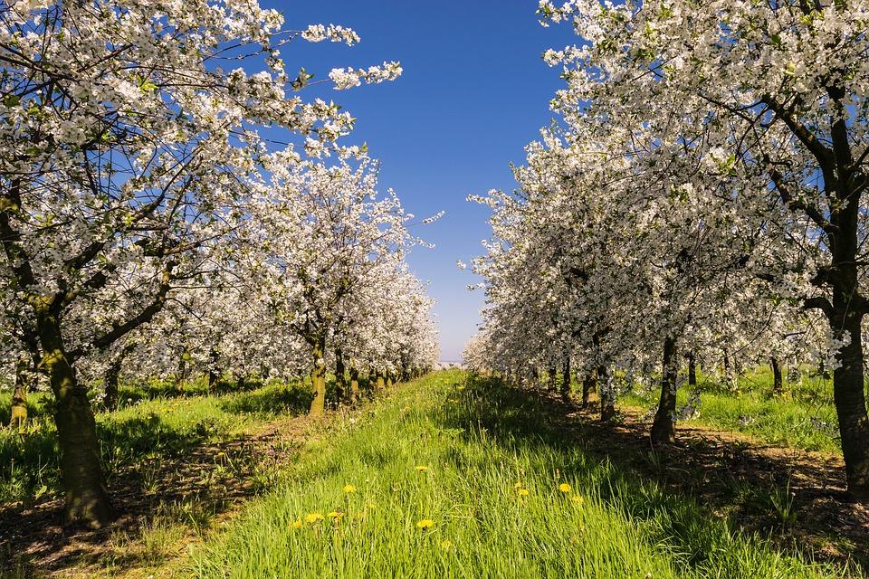 fruitiers-blog-delbard-jardin
