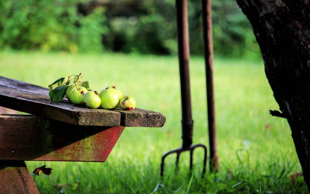 septembre-jardin-blog-delbard-astuce