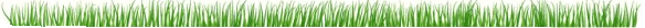 gazon herbe delbard blog jardin conseils