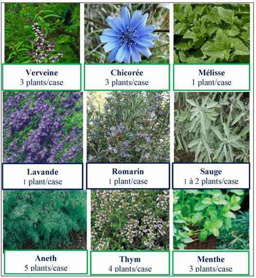 carre potager inspirations legumes fleurs blog delbard