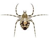 insecte2