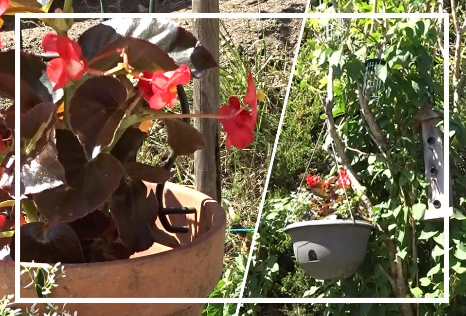 jardiniere suspension fleurs conseils astuces tuto sec ete blog delbard jardin
