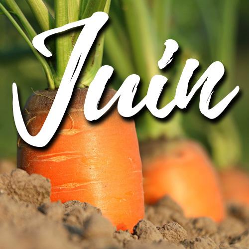potager-blog-delbard-jardin-conseils-juin