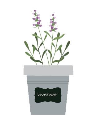 lavende-blog-delbard-jardin-plante