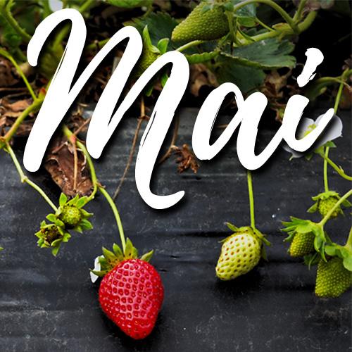 potager-mai-blog-delbard-jardin-conseils