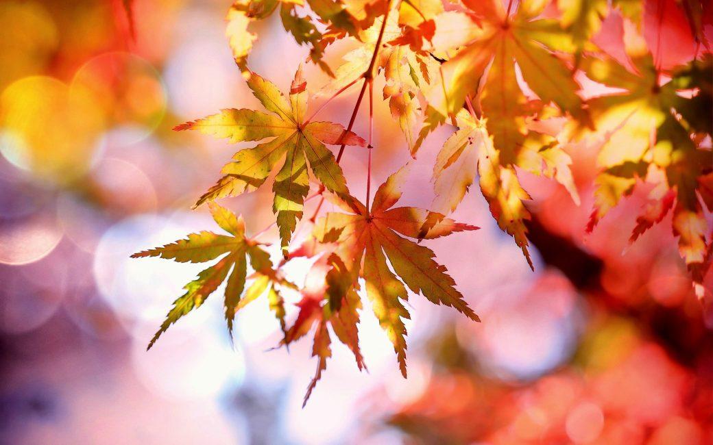 Delbard jardin blog conseil automne novembre