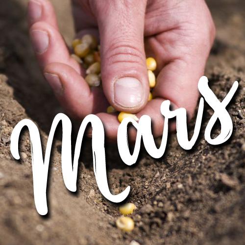 potager-blog-jardin-delbard-conseils
