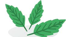 menthe-blog-delbard-jardin-plante