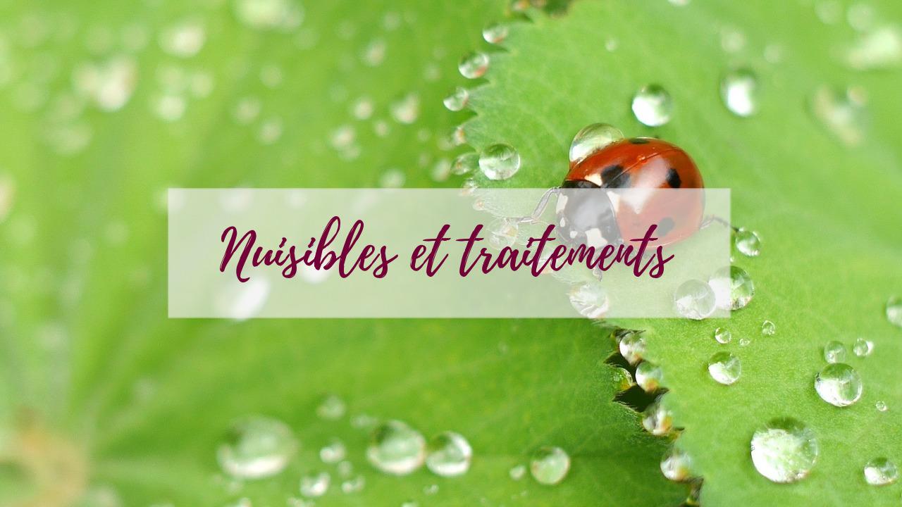 blog-delbard-jardin-nuisibles-entretien-traitement
