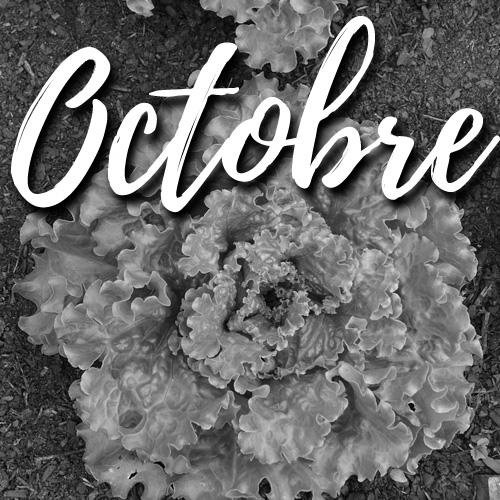 potager facile-octobre