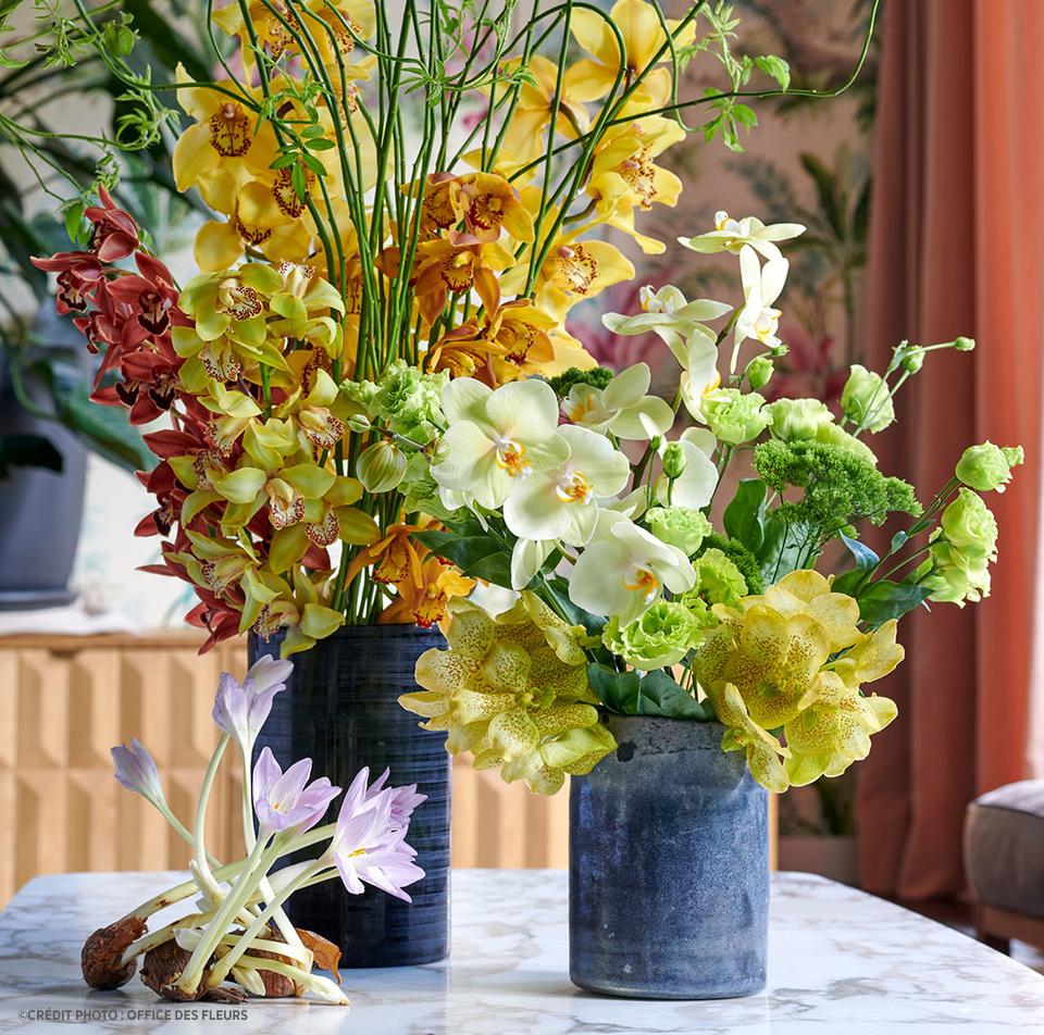 orchidée Delbard