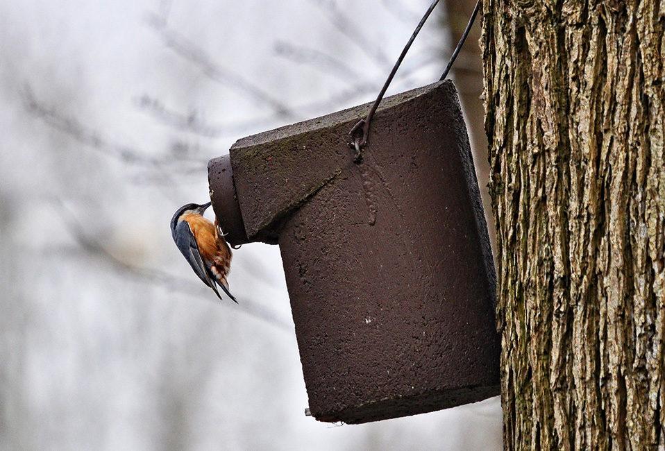 oiseau entretien mangeoire préservation jardin eau nourriture conseils Blog Delbard