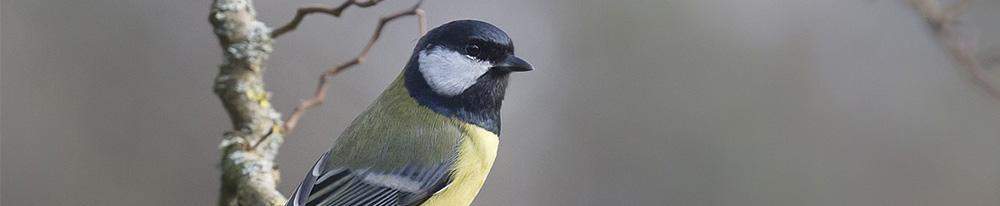 Oiseau entretien cohabitation jardin mangeoire nichoir abreuvoir Blog Delbard
