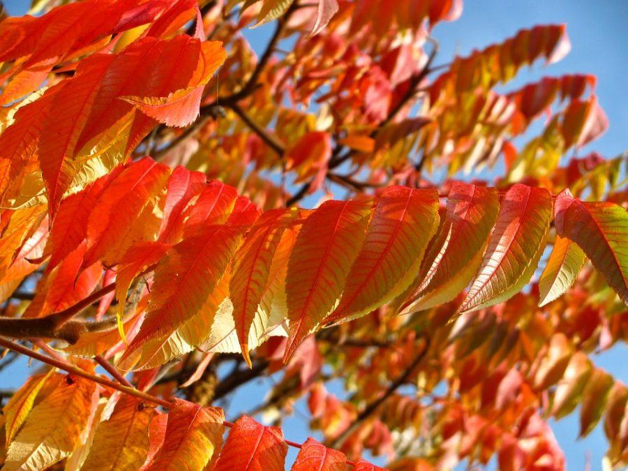 feuilles orange blog delbard jardin conseils