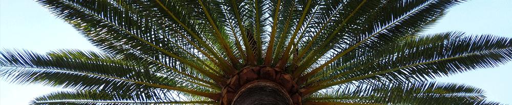 Palmiers extérieur jardin origine Blog Delbard
