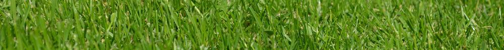 blog delbard jardin pelouse
