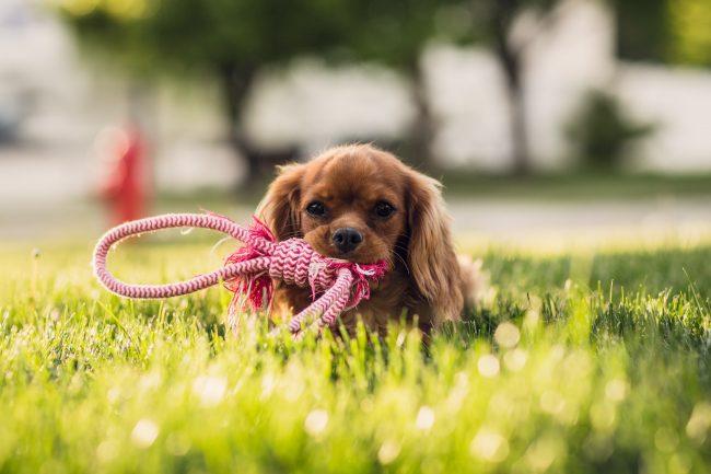 chien-tiques-blog-delbard-jardin