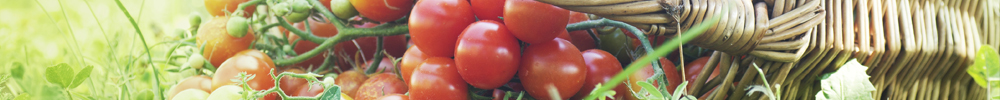 blog delbard tomates potager jardin