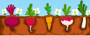 potager-blog-delbard-jardin