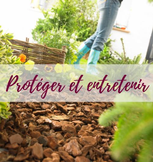 Mon chez moi le blog par delbard le blog delbard for Entretien poivron jardin