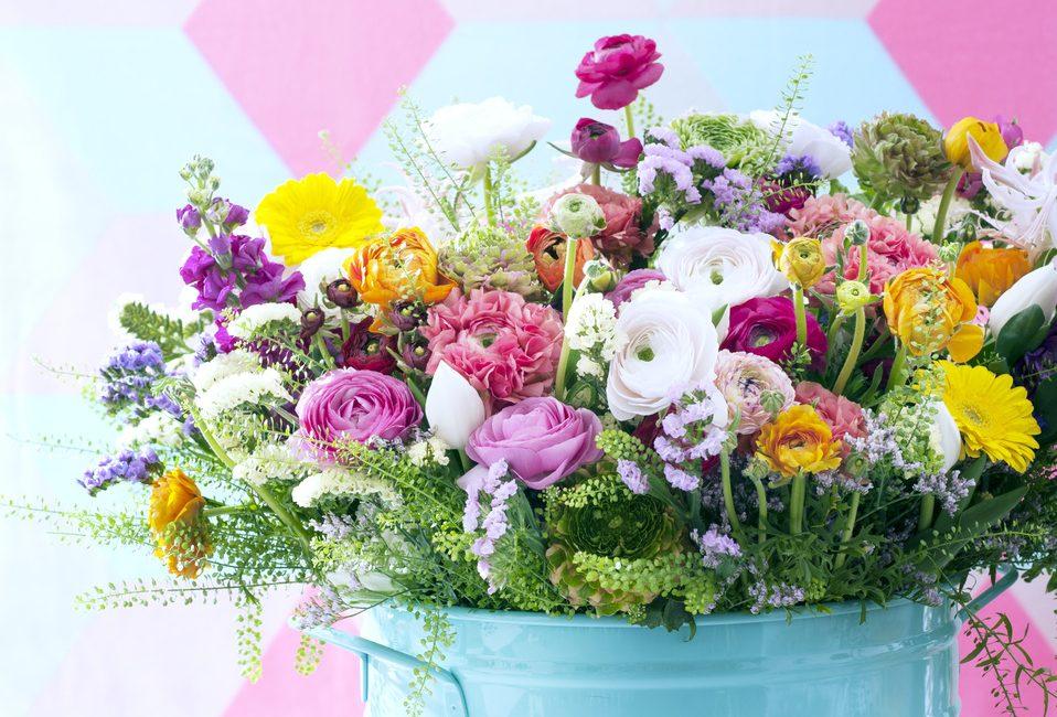 renoncules-blog-delbard-plante