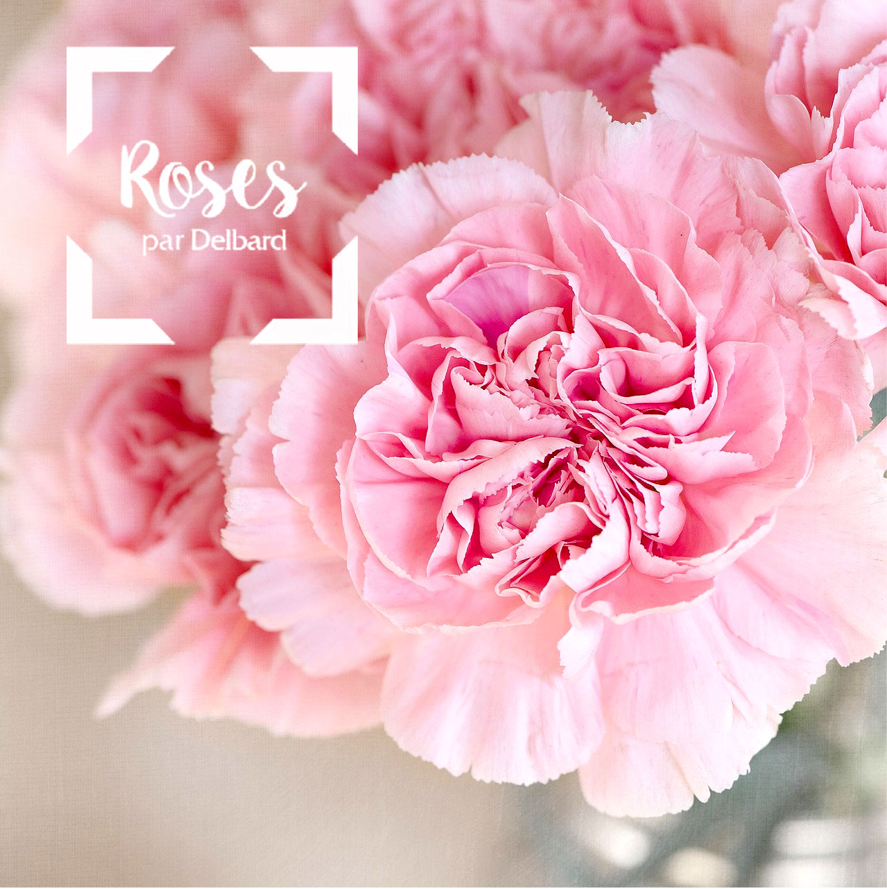 blog-jardin-delbard-roses-rosiers-conseils