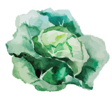 salades-blog-delbard-potager
