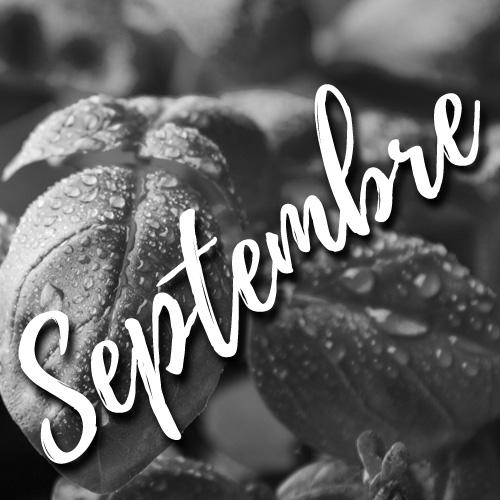 potager facile-septembre