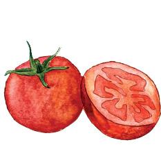 tomate-blog-delbard-jardin-cuisine