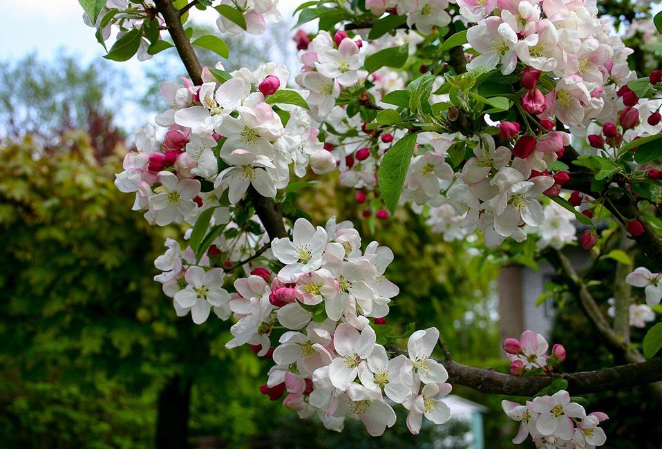 travaux jardin conseils astuces entretien blog delbard